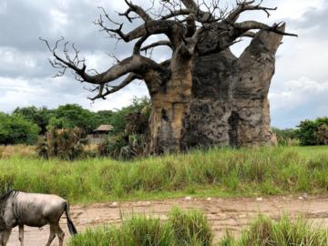 kilimanjarosafari